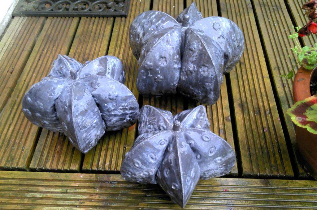 Seed pods (medium)